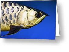 Closeup Of A Fish Greeting Card