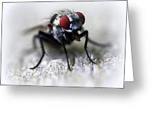 Closeup Of A Fly  Greeting Card by Maureen  McDonald