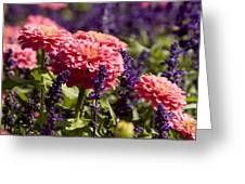 Closeup Of Colorful Flowers In Butchart Greeting Card