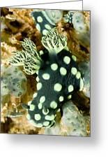 Closeup Of Nudibranch Nembrotha Greeting Card