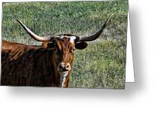 Closeup Of Texas Longhorn Greeting Card