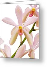 Closeup Pink Orchid Greeting Card