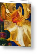 Clothed In Majesty And Light Greeting Card