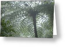Cloud Forest Ceiling, Costa Rica Greeting Card