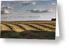 Clouds Over Canola Field On Farm Greeting Card