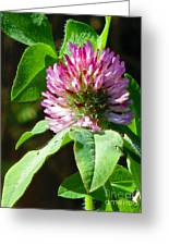 Clover Blossom Day Greeting Card