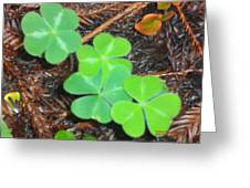 Clovers In The Woods Greeting Card