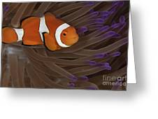 Clownfish In Purple Tip Anemone Greeting Card