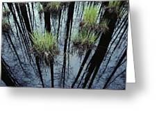 Clumps Of Grass In Water Reflecting Greeting Card