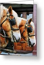 Clydesdale Closeup Greeting Card