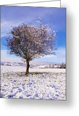 Co Antrim, Ireland Hawthorn Tree Known Greeting Card by The Irish Image Collection