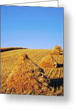 Co Down, Ireland Oats Greeting Card