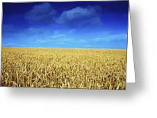 Co Louth,irelandwheat Field Greeting Card