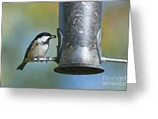 Coal Tit On Feeder Greeting Card