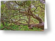Coast Live Oak Greeting Card