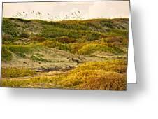 Coastal Plants On Dunes Greeting Card