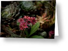 Cobweb Hen And Chicks 2 Greeting Card
