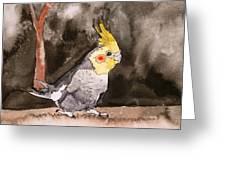 Cockatiel Greeting Card