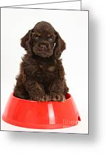 Cocker Spaniel Pup In Doggy Dish Greeting Card