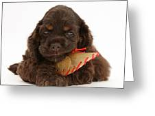 Cocker Spaniel Pup With Chew Treat Greeting Card