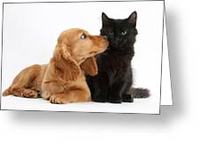 Cocker Spaniel Puppy And Maine Coon Greeting Card
