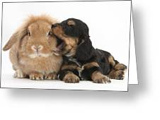 Cockerpoo Pup And Lionhead-lop Rabbit Greeting Card