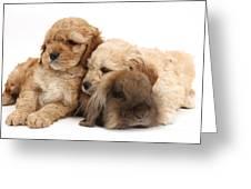 Cockerpoo Puppies And Rabbit Greeting Card
