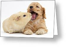 Cockerpoo Puppy And Guinea Pig Greeting Card