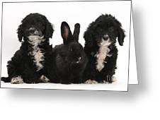 Cockerpoo Pups And Rabbit Greeting Card