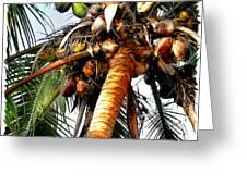 Cocoanuts Squared Greeting Card
