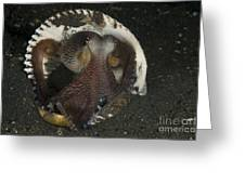 Coconut Octopus In Shell, North Greeting Card