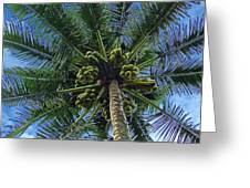 Coconut Palm Greeting Card