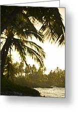 Coconut Palm Trees On The Coast Greeting Card