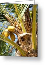 Coconuts 1 Greeting Card