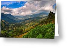 Cocora Valley Greeting Card