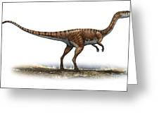 Coelophysis Bauri, A Prehistoric Era Greeting Card