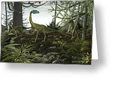 Coelophysis Dinosaurs Walk Amongst Greeting Card