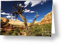 Cohab Canyon At Capitol Reef Greeting Card
