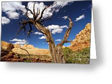 Cohab Canyon Overlook Greeting Card