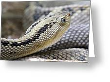 Coiled In Wait Greeting Card