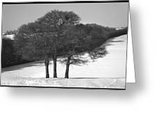 Cold And Bare. Greeting Card