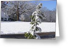 Cold Beauty Greeting Card