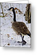Cold Footed Goose On The Loose Greeting Card