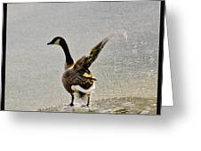Cold Goose Bath Greeting Card
