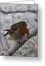 Cold Robin Greeting Card