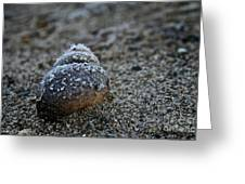 Cold Shell Greeting Card