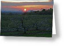 Cold Spring Orchard Greeting Card