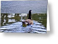 Cold Swim In The Pond Greeting Card