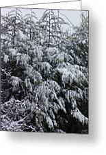 Cold Winter Snow Greeting Card