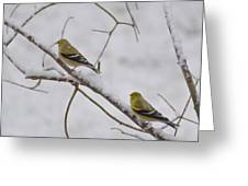 Cold Yellow Finch Walk Greeting Card